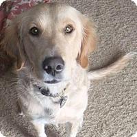 Adopt A Pet :: SAGE - St Louis, MO