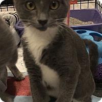 Adopt A Pet :: Pinot - Turnersville, NJ