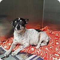 Adopt A Pet :: Opie - Brownsville, TX