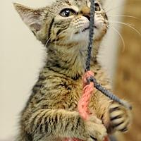 Adopt A Pet :: Maribel - Mt. Prospect, IL