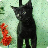 Adopt A Pet :: Pickle Me - Muskegon, MI