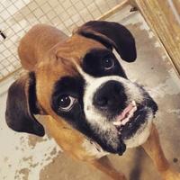 Adopt A Pet :: Rousey Broaddrick - Tulsa, OK