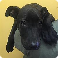 Adopt A Pet :: 17-07-2242 Olivia - Dallas, GA