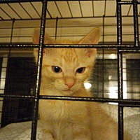 Adopt A Pet :: Tabsy - Flower Mound, TX