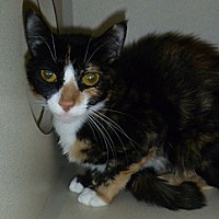 Adopt A Pet :: Tecate - Hamburg, NY
