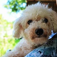 Adopt A Pet :: Jill - Granbury, TX
