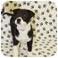 Photo 3 - Shar Pei/Shepherd (Unknown Type) Mix Puppy for adoption in Broomfield, Colorado - Blackburn