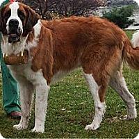 Adopt A Pet :: STACHE - ADOPTION PENDING - Sudbury, MA