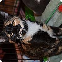 Adopt A Pet :: DOLLY - Kelso/Longview, WA