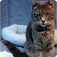 Adopt A Pet :: Tidbit - McKinney, TX
