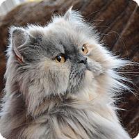 Adopt A Pet :: Sapphire - Columbus, OH