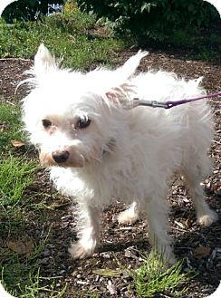 Terrier (Unknown Type, Medium) Mix Dog for adoption in Seattle, Washington - Davie