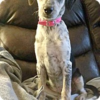 Adopt A Pet :: Brinkley - North Olmsted, OH