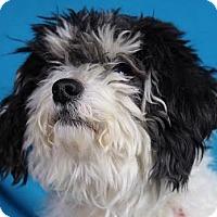 Adopt A Pet :: Abbie - Minneapolis, MN