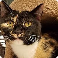 Adopt A Pet :: Mila *video* - Philadelphia, PA