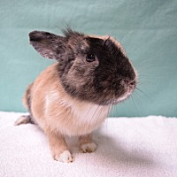 Adopt A Pet :: Sunflower - Fountain Valley, CA