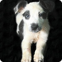 Adopt A Pet :: Jupiter - Lufkin, TX