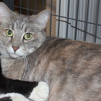 Adopt A Pet :: Priscilla - Battle Creek, MI