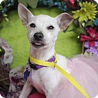 Adopt A Pet :: Topeka - San Antonio, TX