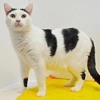 Adopt A Pet :: SMILEY - Sacramento, CA