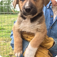 Adopt A Pet :: Stanley - Hohenwald, TN