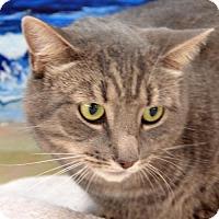 Adopt A Pet :: Simba - Englewood, FL