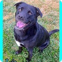 Adopt A Pet :: Leia - Jasper, IN