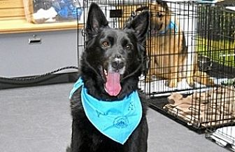 German Shepherd Dog Mix Dog for adoption in Wildomar, California - Kobe