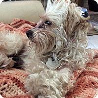 Adopt A Pet :: Bettina - San Jose, CA