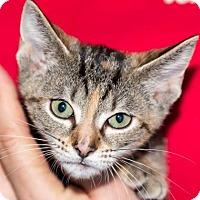 Adopt A Pet :: ADRINA - Fernandina Beach, FL