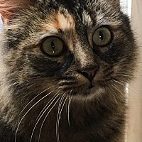 Adopt A Pet :: Felicity - Wasilla, AK