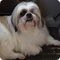 Adopt A Pet :: Toby - Hazard, KY