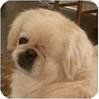 Adopt A Pet :: Norma Jean-PA - Emmaus, PA