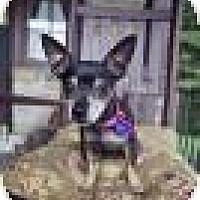 Adopt A Pet :: Agnes - Mt Gretna, PA