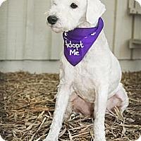 Adopt A Pet :: Toby - North Palm Beach, FL