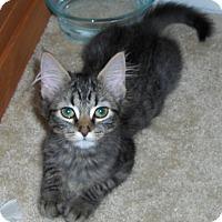 Adopt A Pet :: Maddie - Richmond, VA