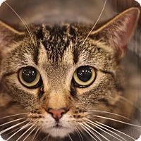 Adopt A Pet :: Sue - Sacramento, CA