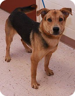 Shepherd (Unknown Type) Mix Dog for adoption in McDonough, Georgia - Neon