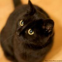 Adopt A Pet :: Robin - Trenton, NJ
