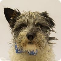 Adopt A Pet :: Ravello - Mission Viejo, CA
