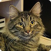 Adopt A Pet :: Majestic - Columbia, MD
