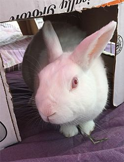 Dwarf Mix for adoption in San Clemente, California - FREDDIE