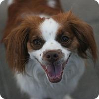 Adopt A Pet :: Winston - Canoga Park, CA