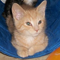 Adopt A Pet :: Indy - Lacon, IL