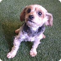 Adopt A Pet :: Tessa - Temecula, CA
