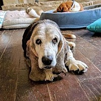 Adopt A Pet :: Miss Molly - Grapevine, TX