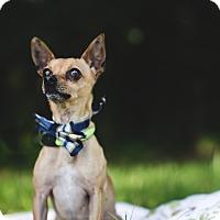Adopt A Pet :: Billy - Fort Valley, GA