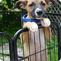 Adopt A Pet :: Turner - Danbury, CT