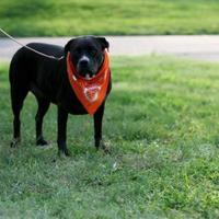 Adopt A Pet :: Ebbie - Clay Center, KS