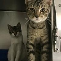 Adopt A Pet :: Sam - Newport, NC
